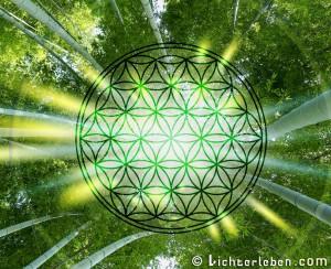 Blume des Lebens Bambuswald Wallpaper