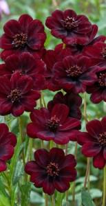 Blumen Marsala mit Gruen