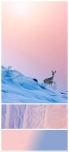 Farbstimmung Trendfarbe 2016 Rose Quartz Serenity von Pantone