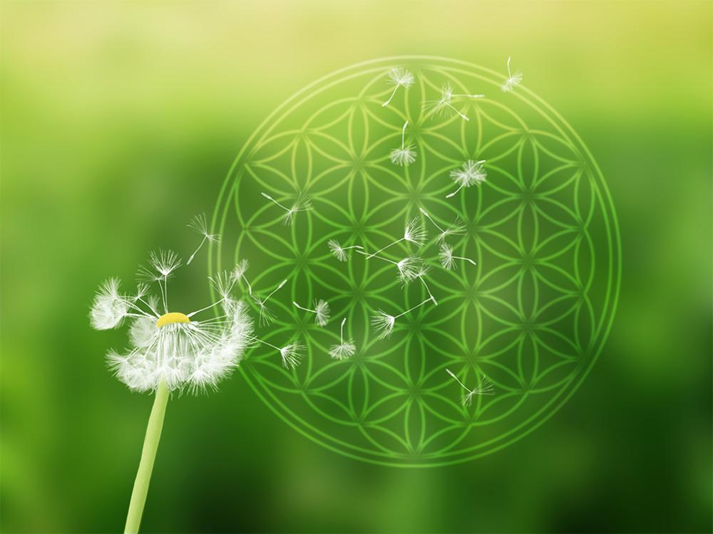 Blume des Lebens Wandbild