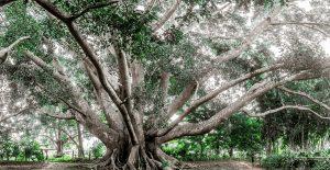 Dein Lebensbaum braucht Sonnenlicht