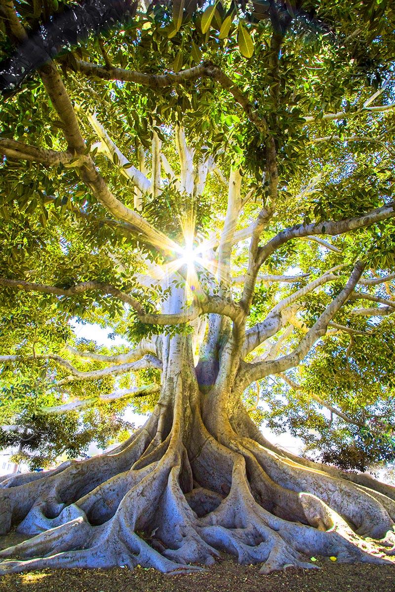 Der Baum deines Lebens braucht Licht dein Lebensbaum