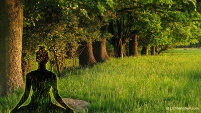 zum Fotoprodukt Yogi im Wald
